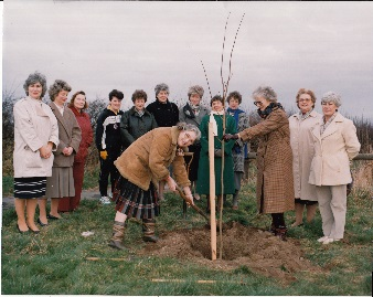 The planting of Peggy Hambling Copper Bech Tree at the entrance to the village on Gainsborough Road, Winthorpe - July 1989.